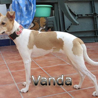 Vanda-(9)web