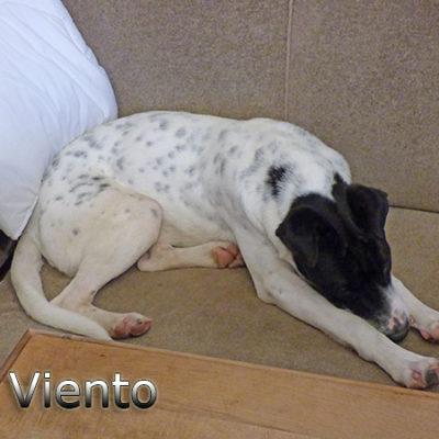 Viento_Update_12-2019-(3)web