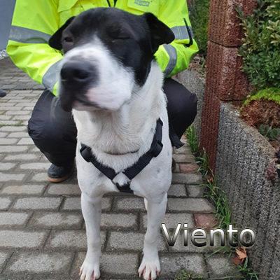 Viento_Update_15122019-(4)web