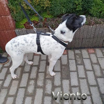 Viento_Update_15122019-(5)web