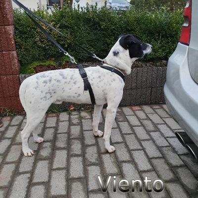 Viento_Update_15122019-(6)web