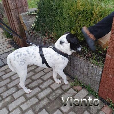 Viento_Update_15122019-(7)web