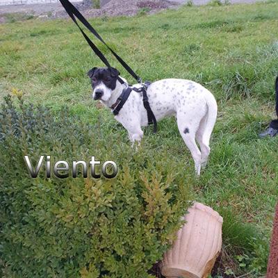 Viento_Update_15122019-(8)web