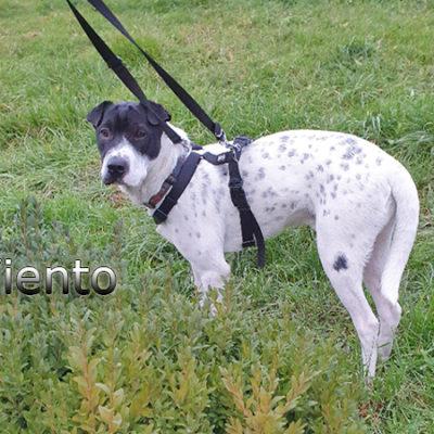 Viento_Update_15122019-(9)web