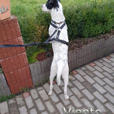 Viento_Update_15122019web