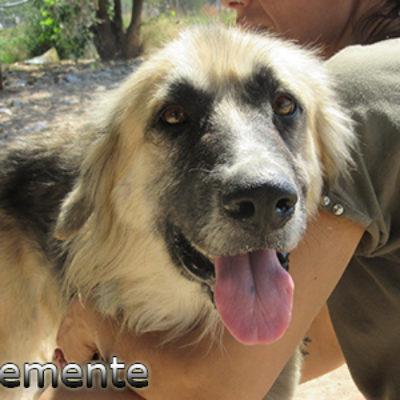 Clemente-(1)web