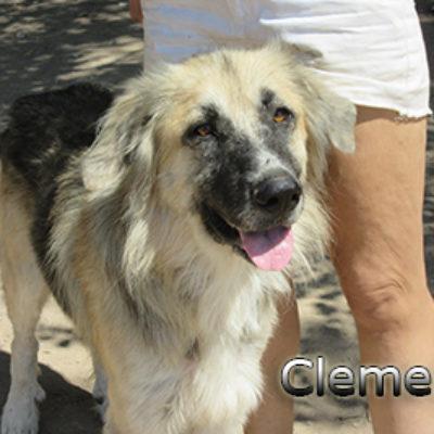 Clemente-(3)web