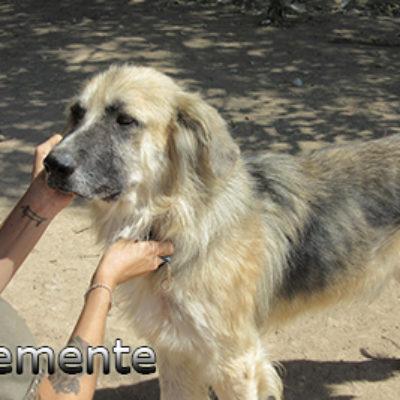 Clemente-(5)web