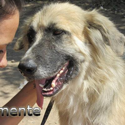 Clemente-(6)web