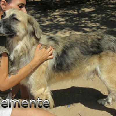 Clemente-(9)web