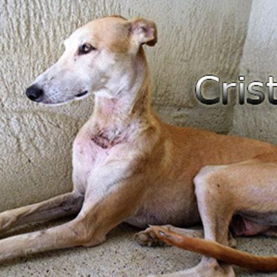 Cristal-(1)web