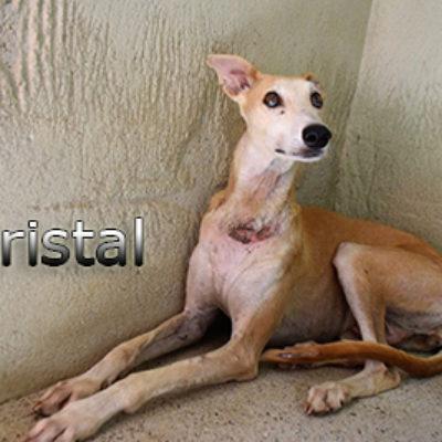 Cristal-(4)web