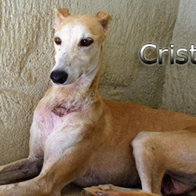 Cristal-(6)web
