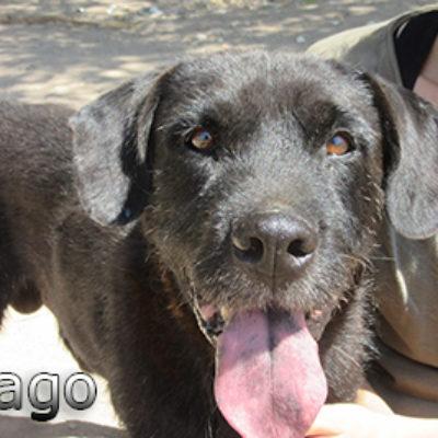 Mago-(13)web