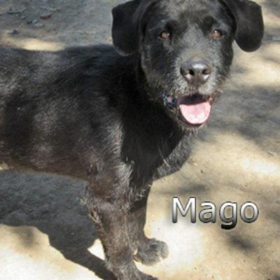 Mago-(2)web