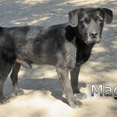 Mago-(3)web