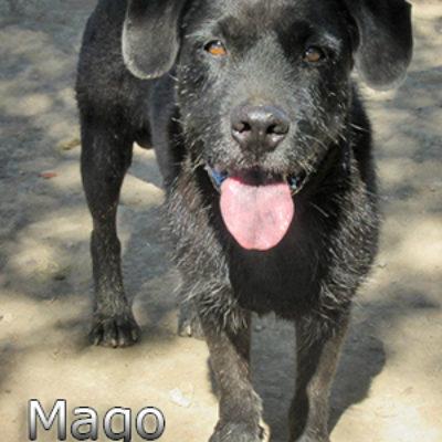 Mago-(4)bweb