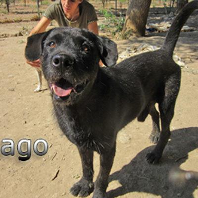 Mago-(5)web