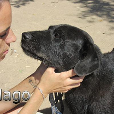 Mago-(7)web