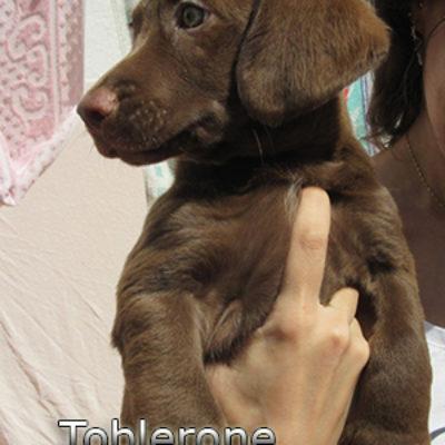 Toblerone-(2)bweb