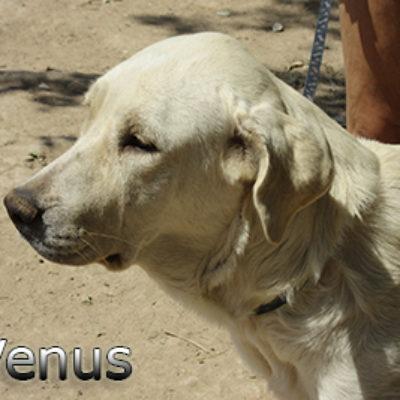 Venus-(2)web