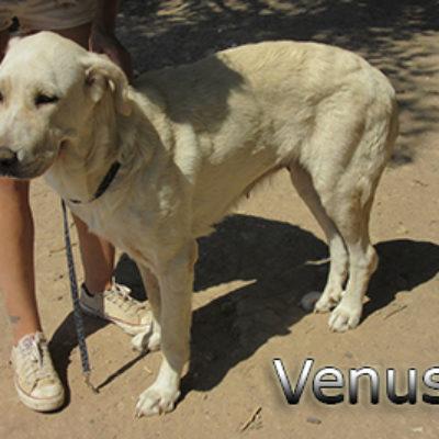 Venus-(7)web