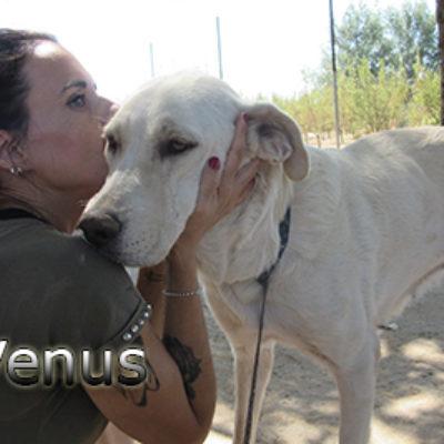 Venus-(9)web