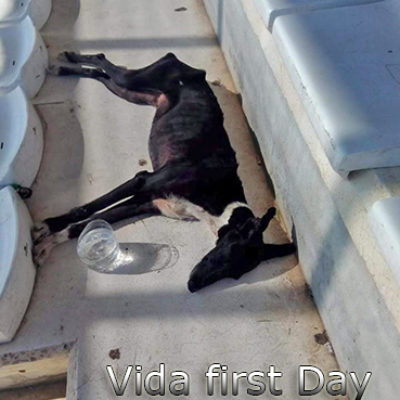 Vida-first-day-(1)web