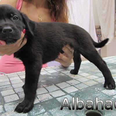 Albahaca-(4)web