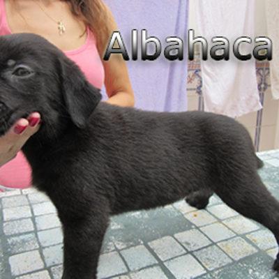 Albahaca-(5)web