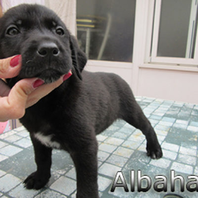 Albahaca-(6)web