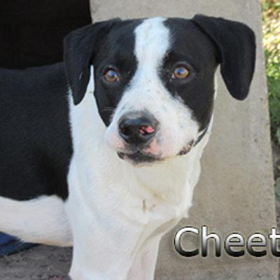 Cheetos-(10)web