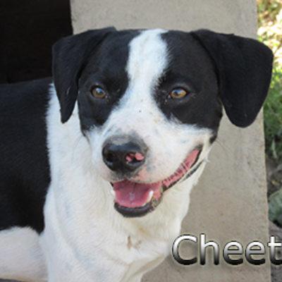 Cheetos-(1)web