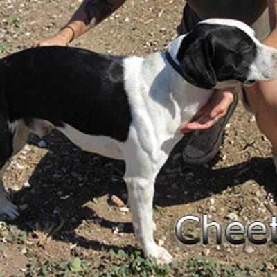 Cheetos-(2)web