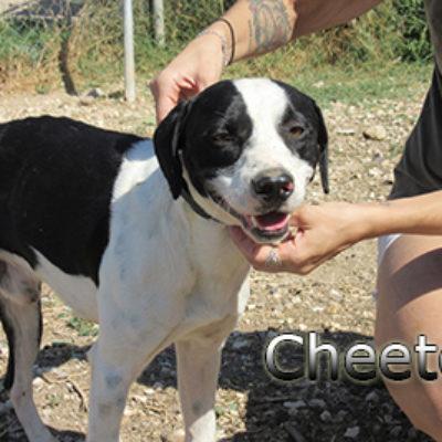 Cheetos-(5)web