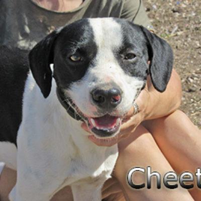 Cheetos-(6)web