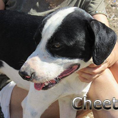 Cheetos-(7)web