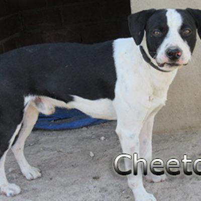 Cheetos-(9)web