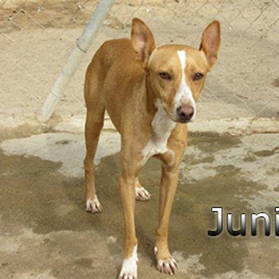 Junior-(2)web