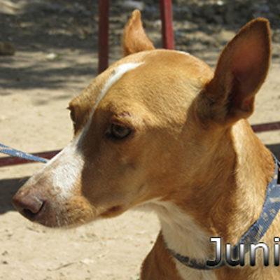 Junior-(3)web