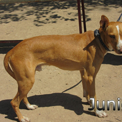 Junior-(5)web
