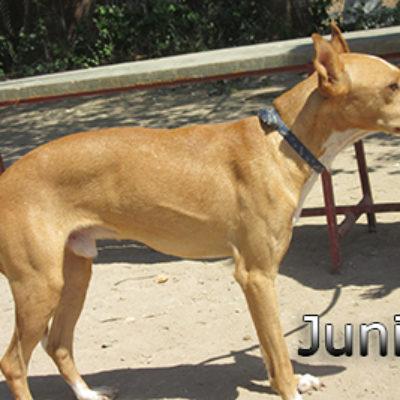 Junior-(6)web