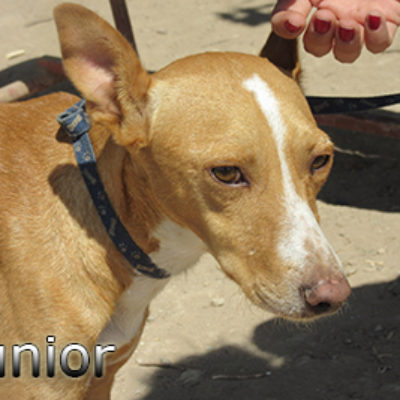 Junior-(9)web