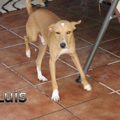 Luis-(2)web
