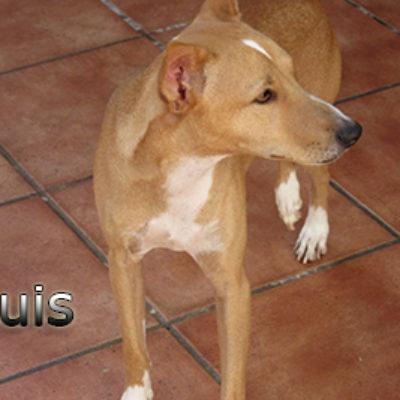 Luis-(3)web