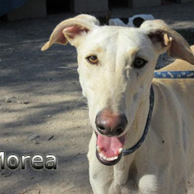 Morea-(5)web