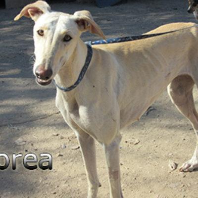 Morea-(6)web