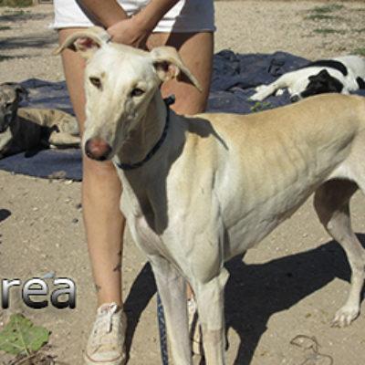 Morea-(9)web