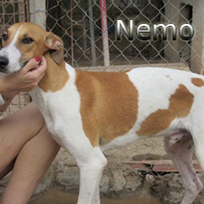 Nemo-(12)web