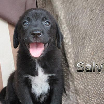 Salvia-(3)web